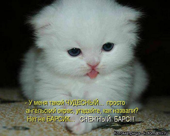 Лучшие котоматрицы недели (50 )