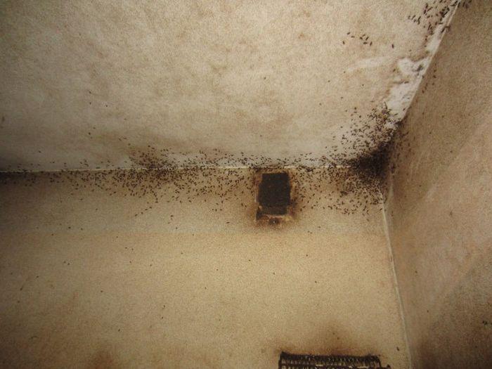 В пустующей Петрозаводской квартире жили более 20 кошек (9 фото)