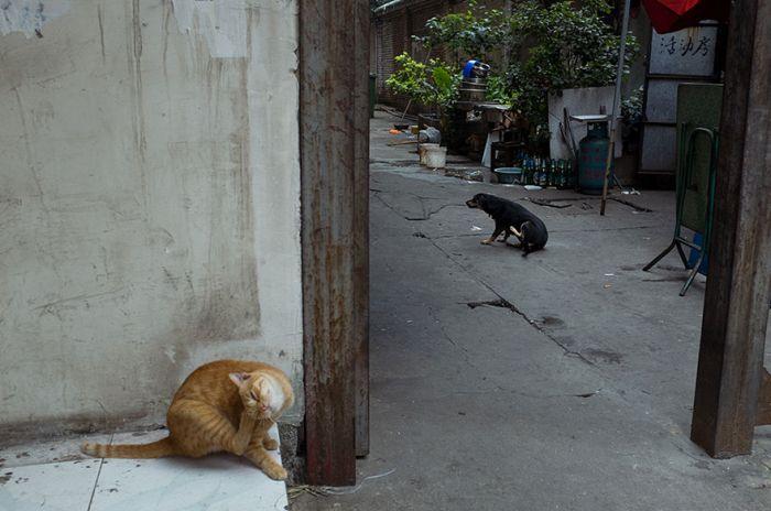 Уличные фотографии от китайского фотографа Тао Лю (24 фото)