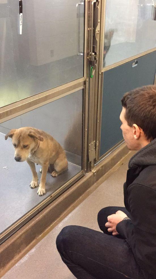 Счастливая собака получила новых хозяев (2 фото)