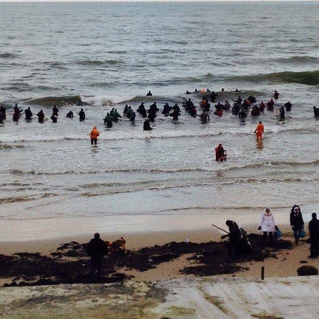 Балтийское море усыпало янтарем пляж поселка Пионерский (4 фото + видео)