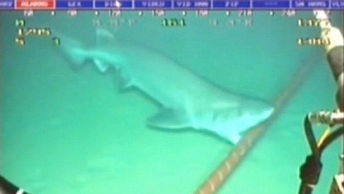 Невероятная история подводного Интернета (110 фото + 2 видео)