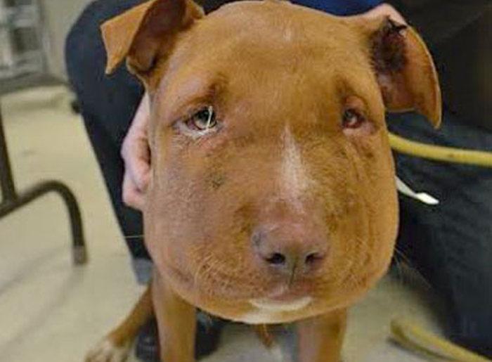 Спасение щенка в США (6 фото)