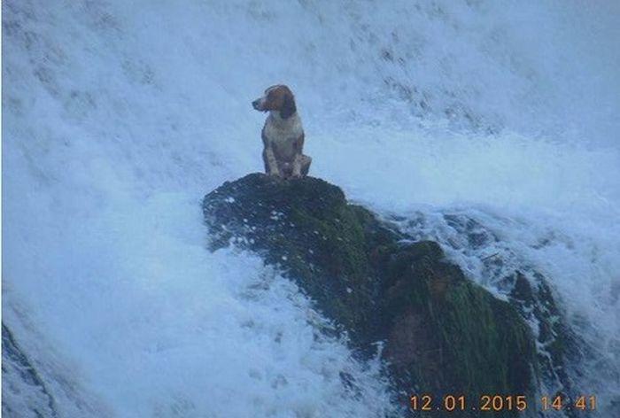 Собака, у которой не задался день (3 фото)