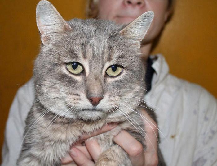 Грустящий кот с человеческим лицом (4 фото)