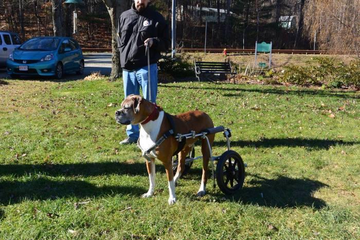 Инвалидные коляски для собак (20 фото)