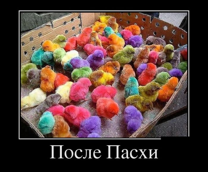 http://trinixy.ru/pics5/20150116/demotivatory_20.jpg