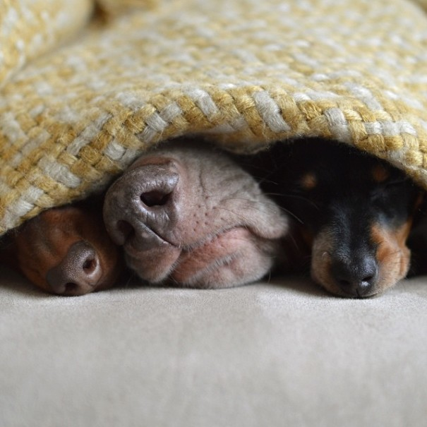 Обаятельный щенок Риз родился в собачьей семье (15 фото)
