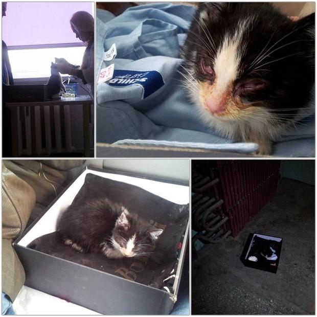 Спасение бездомного котенка (10 фото)