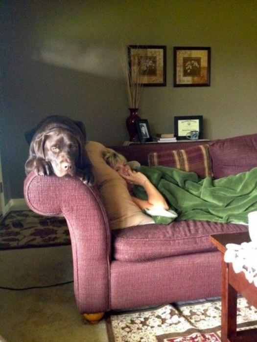 Собаки, которые ведут себя, как кошки (22 фото)
