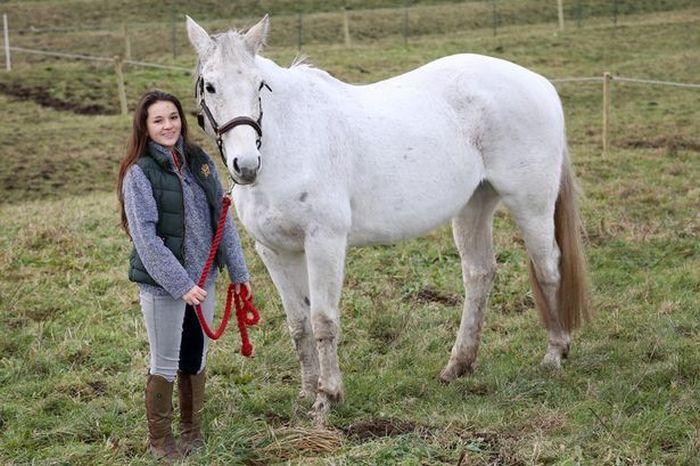 Спасение лошади по кличке Фокси (5 фото)