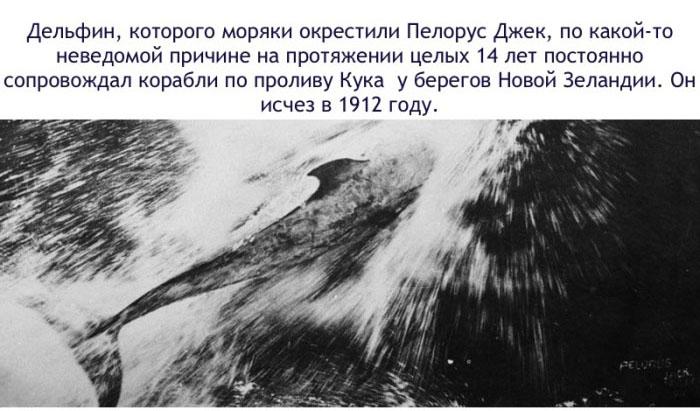 Интересные факты о дельфинах (16 фото)
