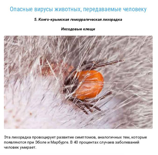 Смертельные заболевания, которые достались нам от животных (27 фото)