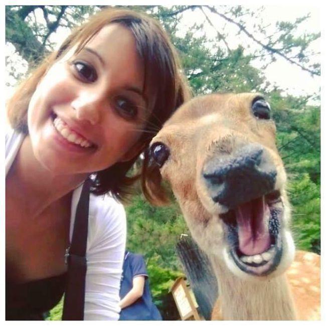 Лучшие селфи с участием людей и животных (20 фото)