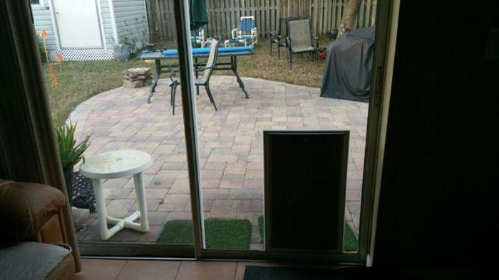 Собака и раздвижная дверь (3 фото)