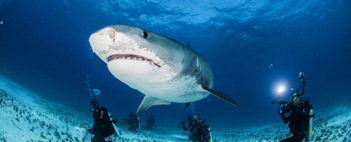 Что видит жертва акулы в последние секунды жизни (11 фото)