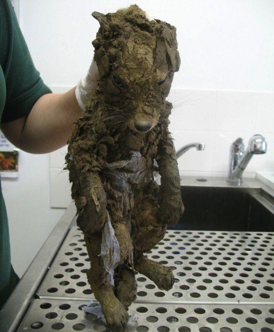 Строители спасли четырехмесячного лисенка (3 фото)
