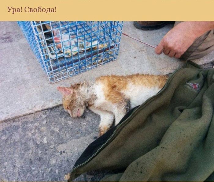 Спасение кошки, застрявшей в трубе (10 фото)