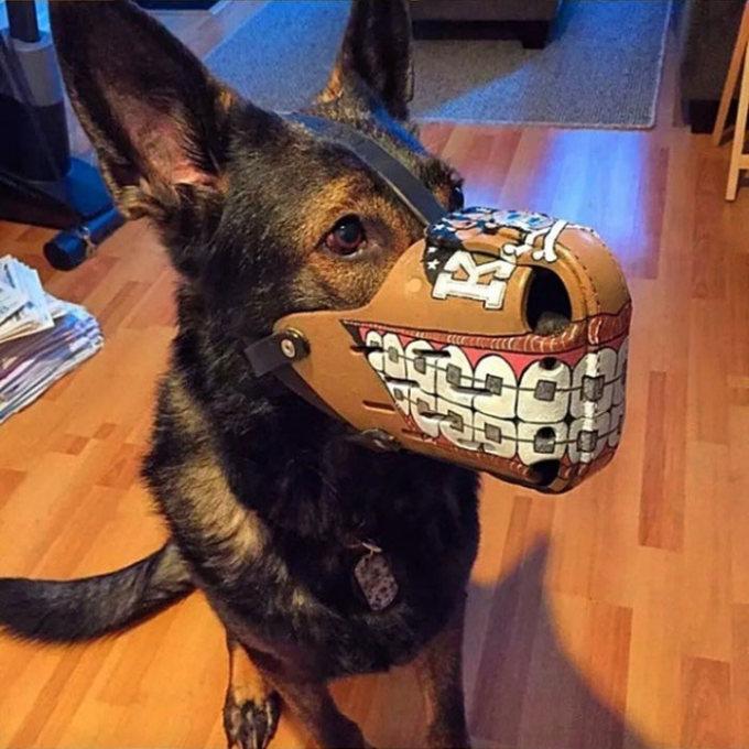 Эксклюзивные намордники для собак (18 фото)