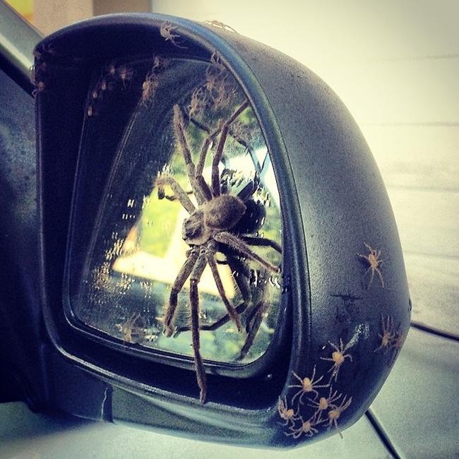 Незваные гости в авто (3 фото)