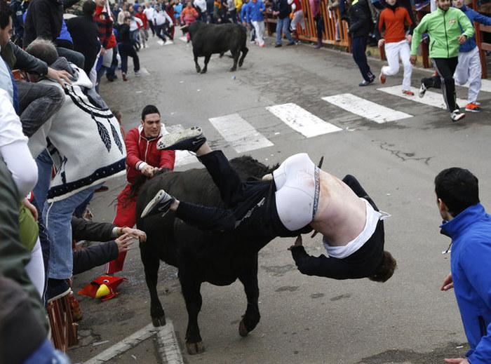Неудачное участие в забеге быков (5 фото)