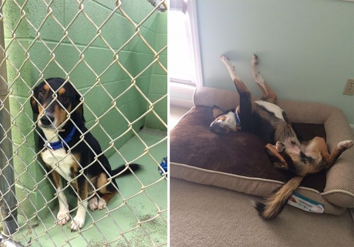 Животные в приюте и в семье: фото до и после (16 фото)