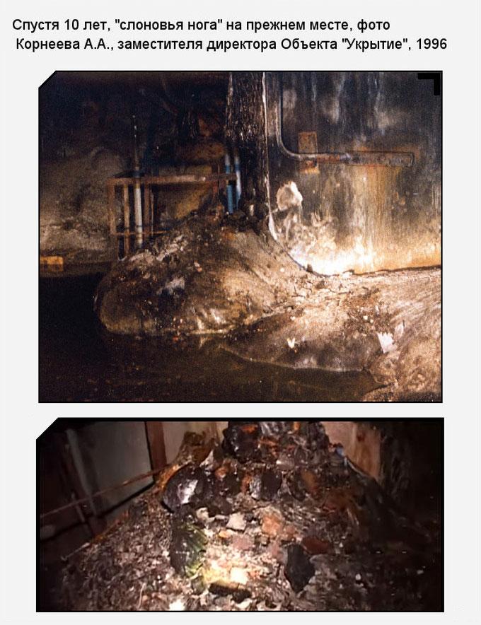 «Слоновья нога» в зоне отчуждения Чернобыльской АЭС (11 фото)