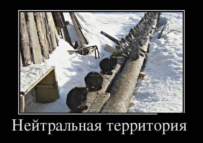http://trinixy.ru/pics5/20150220/demotivatory_11.jpg