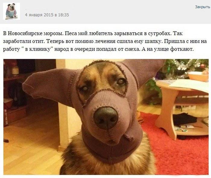 Забавные истории от врачей-ветеринаров (26 скриншотов)