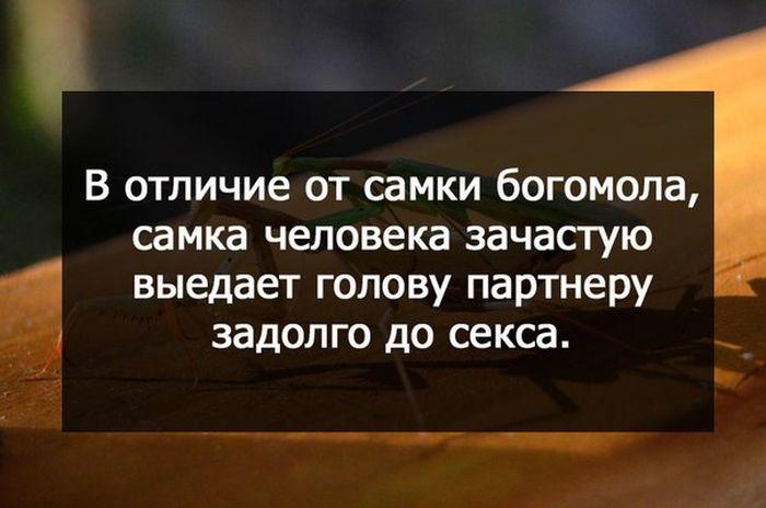 http://trinixy.ru/pics5/20150227/podborka_93.jpg