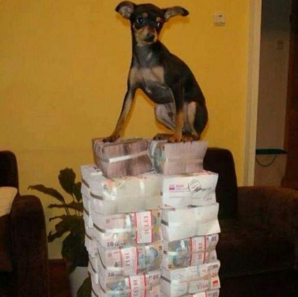 Как живут собаки богатых хозяев (32 фото)