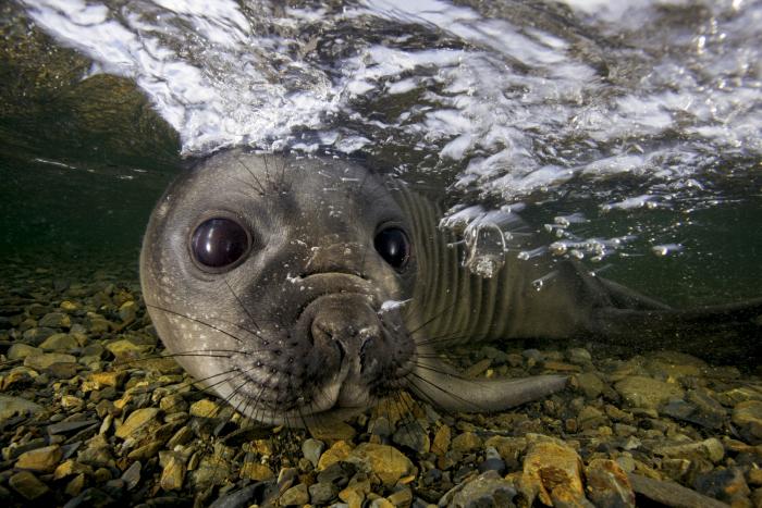 Изумительные фотографии дикой природы от Пола Никлена (33 фото)