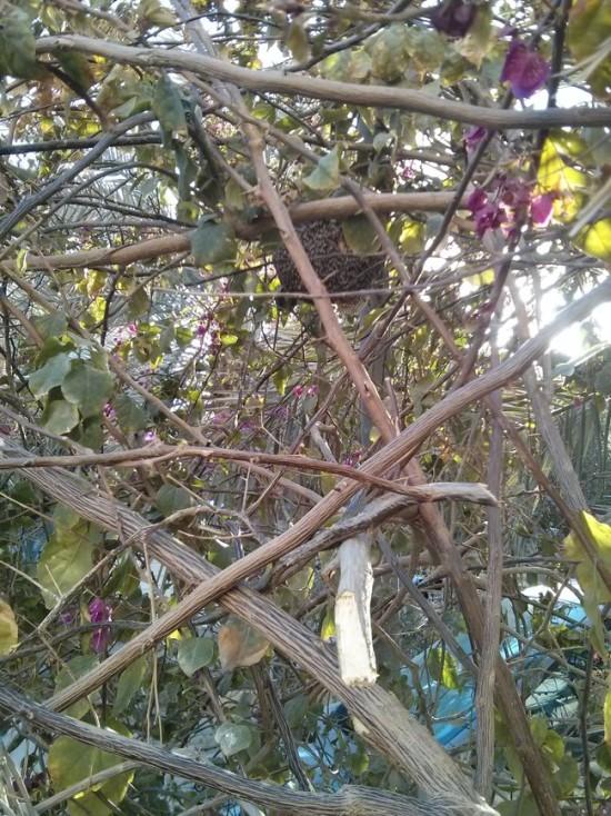 Находка в живой изгороди у дома (6 фото)