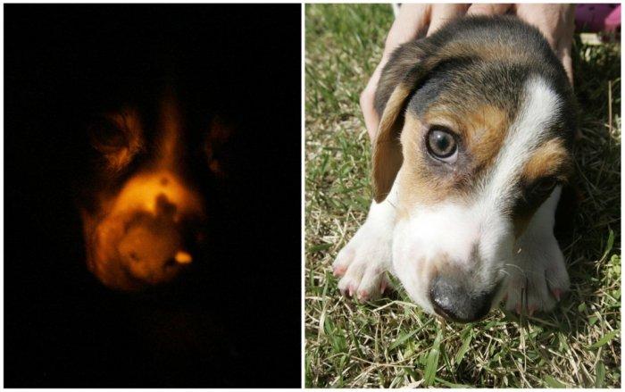 Генетически модифицированные животные (12 фото)