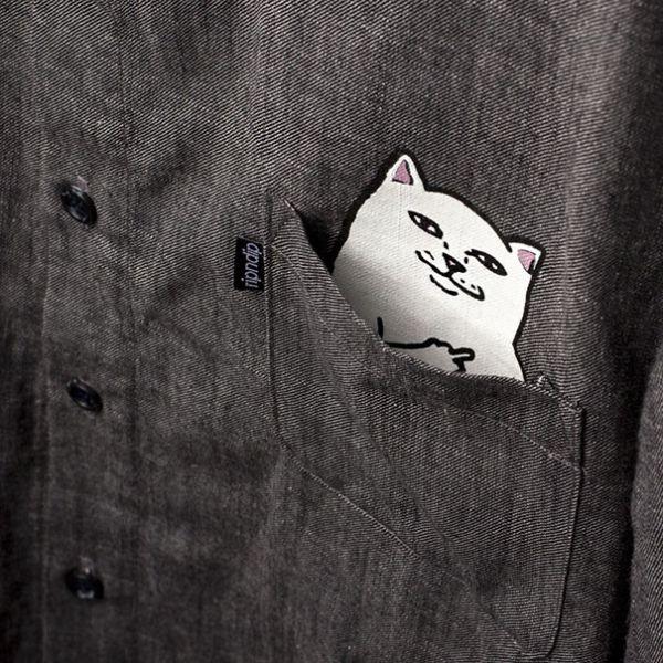 Кошка в кармане (3 фото)