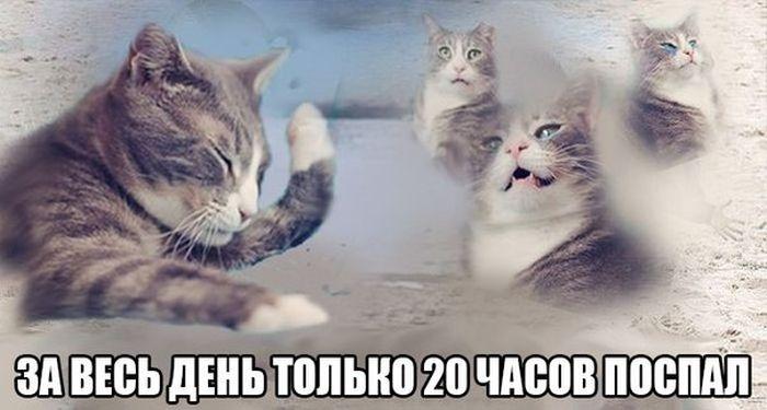 Прикольные картинки (109 фото)