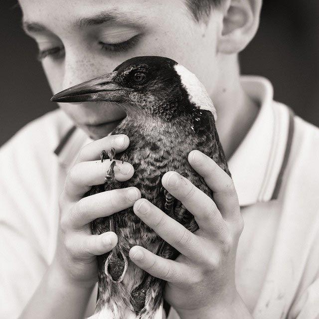 Домашняя сорока по кличке Пингвин (20 фото)