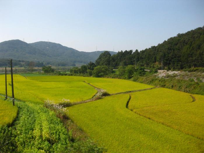 Земледелие в Северной Корее (35 фото)