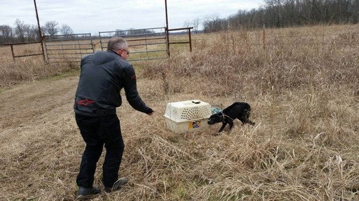 Спасение собаки (18 фото)