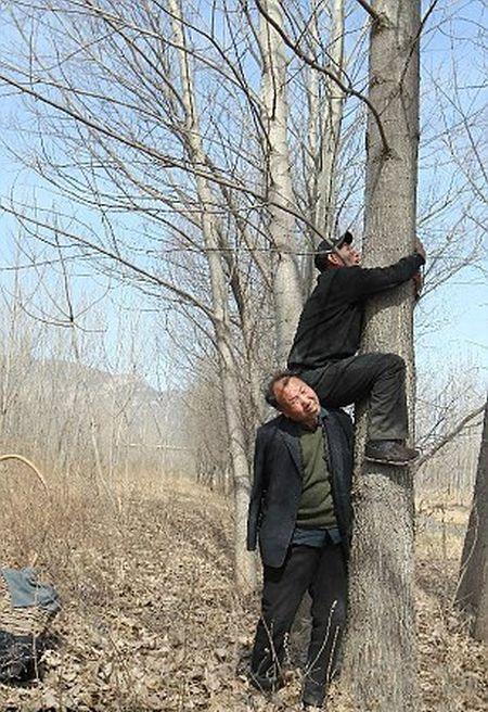 Дуэт китайских инвалидов посадил более 10 000 деревьев (7 фото)
