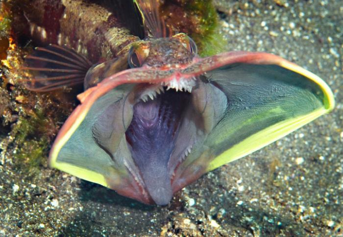 Фотографии самых удивительных существ и необычных природных явлений (29 фото)