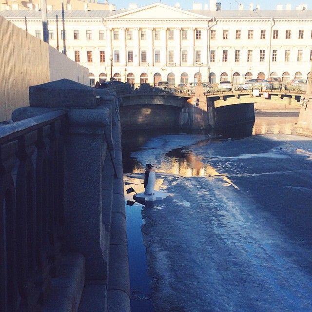 В Санкт-Петербурге в канале Грибоедова появился пингвин (9 фото)