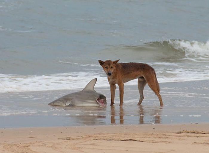 Экзотический животный мир Австралии (22 фото)