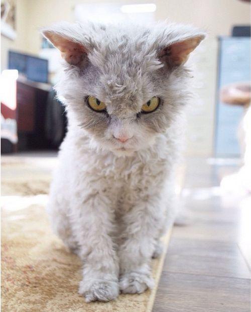 Альберт – самый суровый кот в мире (20 фото)