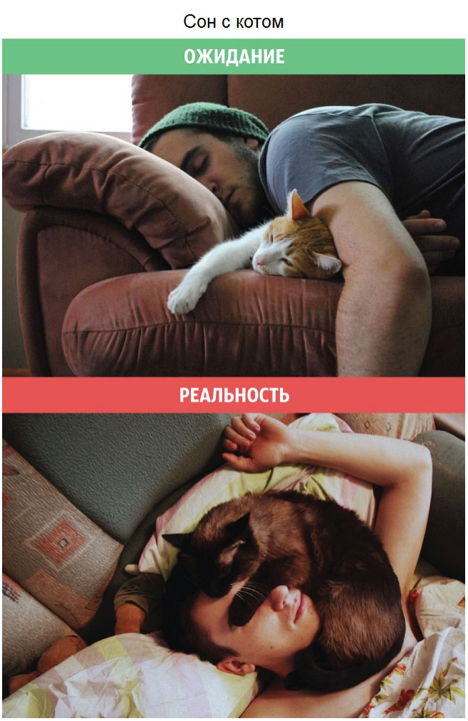 Кошки: ожидания и реальность (10 фото)