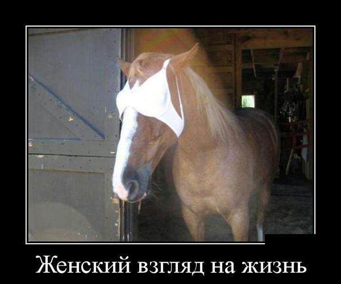 http://trinixy.ru/pics5/20150320/demotivatory_11.jpg