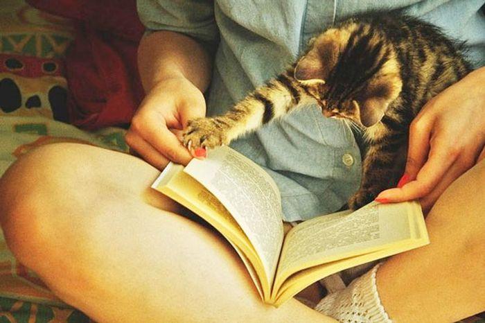 Навязчивые кошки (35 фото)