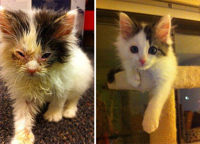 Бывшие бездомные коты (30 фото)