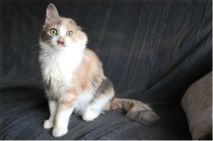 История спасения одного котенка (10 фото)