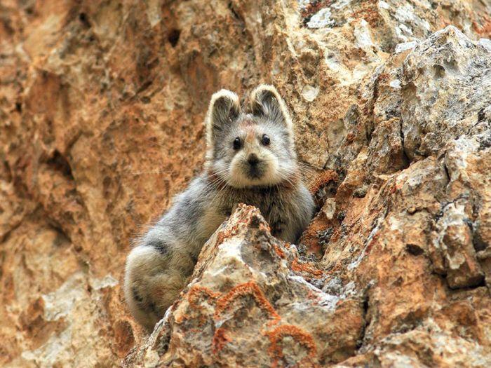 В Китае впервые за 22 года сделали снимок «волшебного кролика» (3 фото)